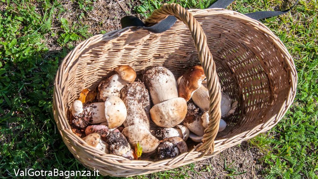 funghi-porcini-101-valtaro