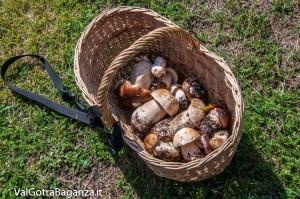 funghi-porcini-102-valtaro