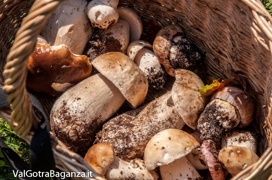 Calendario Funghi.Funghi Porcini Meraviglie Del Bosco Albareto Pr Val
