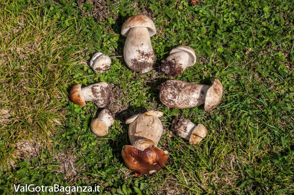 funghi-porcini-116-valtaro