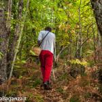 ambiente-100-castagno-funghi