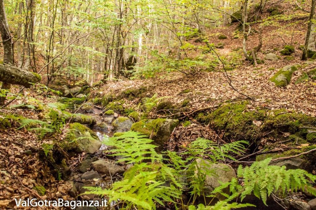 ambiente-101-bosco-e-funghi