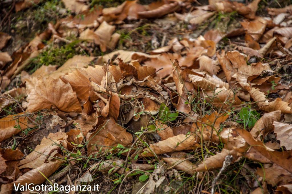 ambiente-108-castagno-funghi
