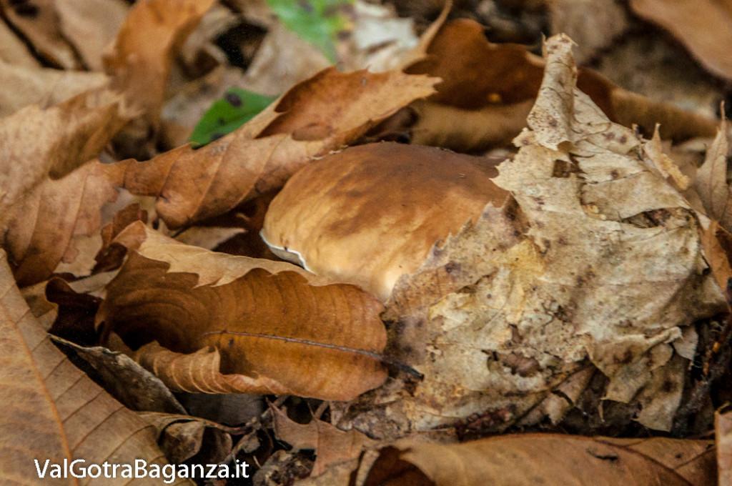 ambiente-110-castagno-funghi