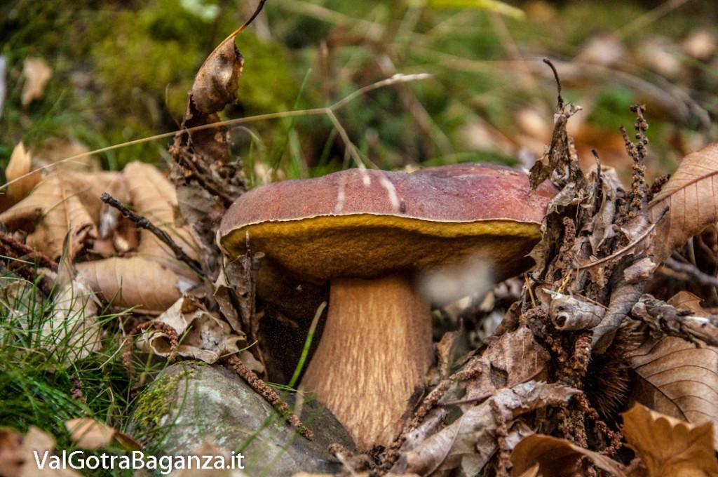 ambiente-122-castagno-funghi