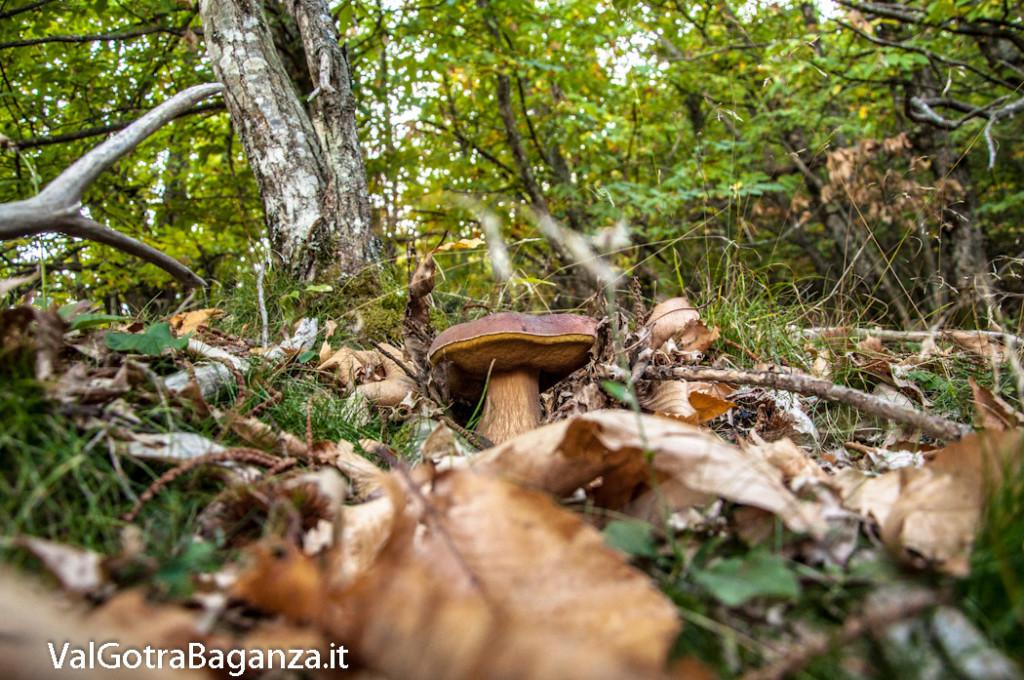 ambiente-123-castagno-funghi