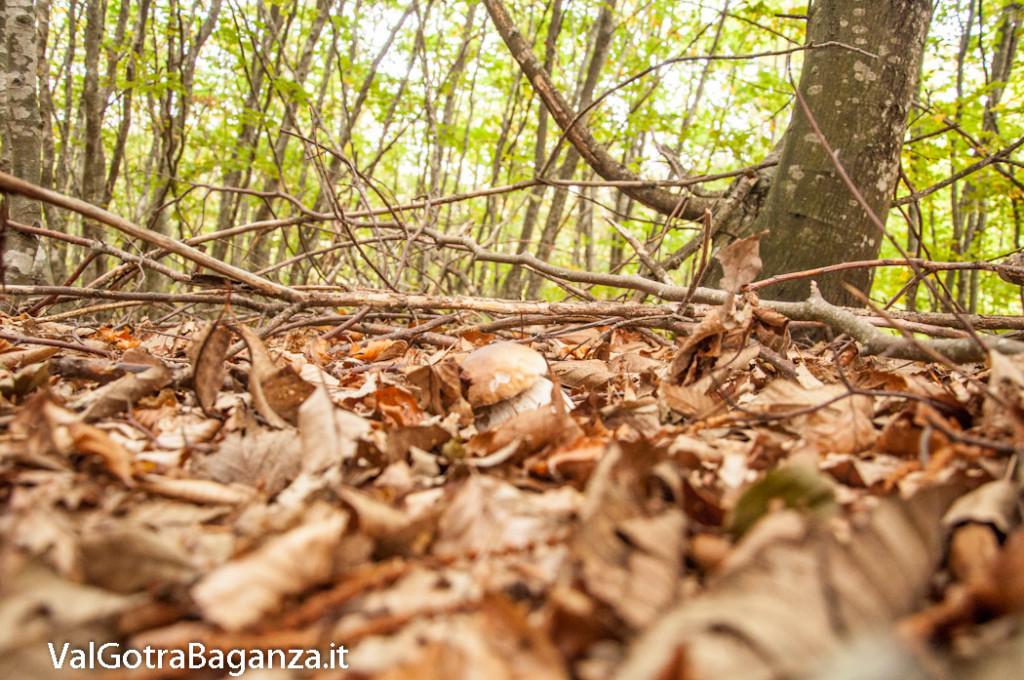 ambiente-132-bosco-e-funghi