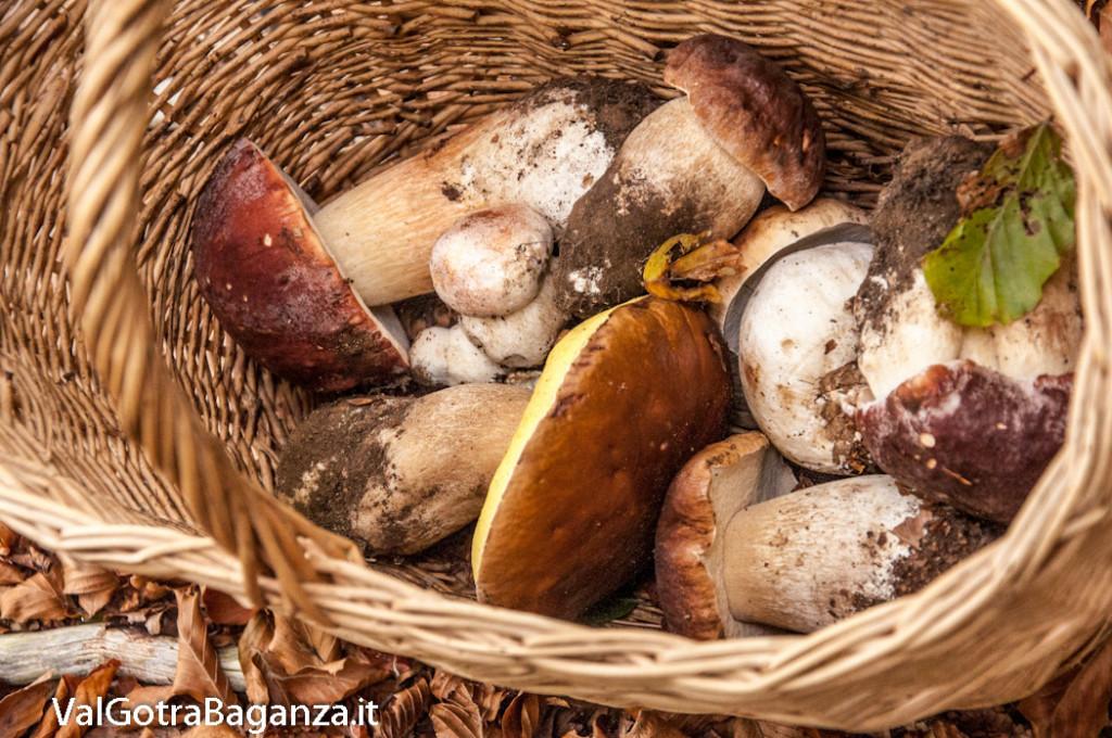 ambiente-143-bosco-e-funghi