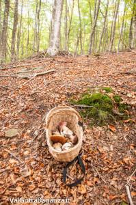 ambiente-148-bosco-e-funghi