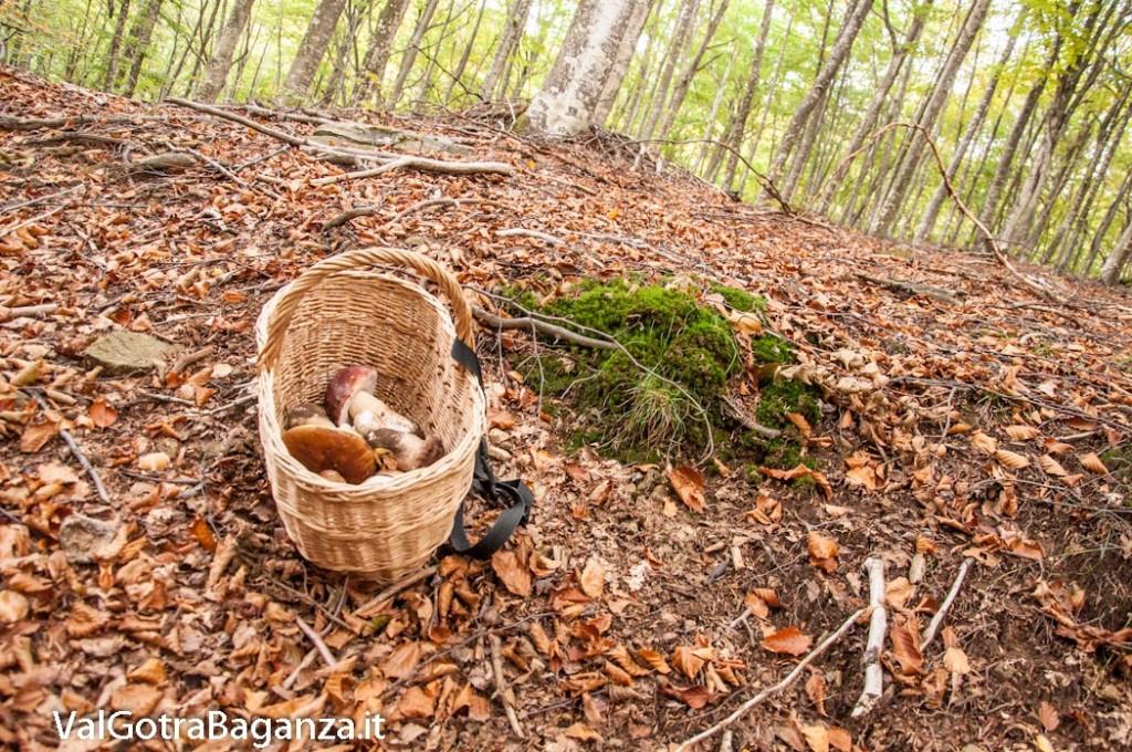 ambiente-149-bosco-e-funghi