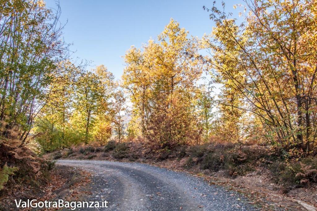 foliage-100-castagneti-val-gotra