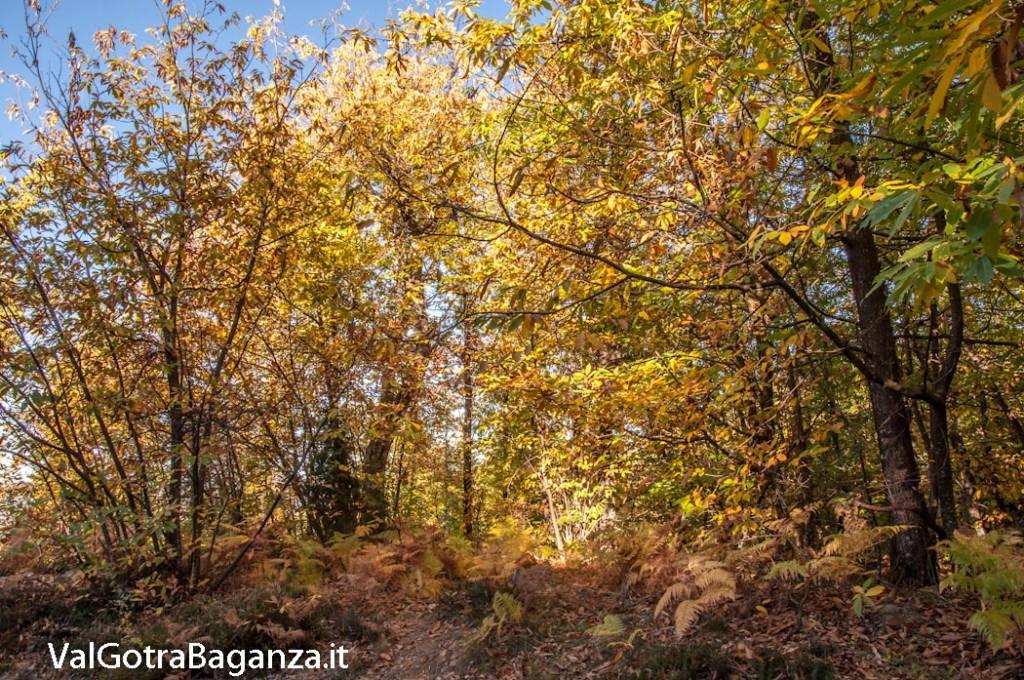 foliage-101-castagneti-val-gotra