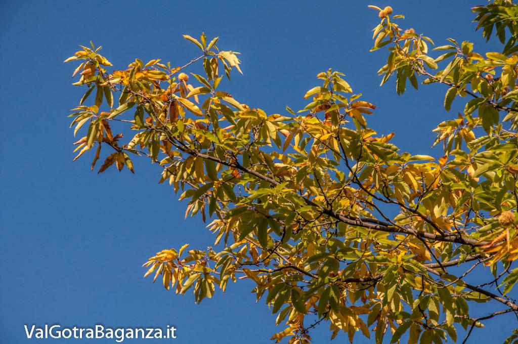foliage-103-castagneti-val-gotra