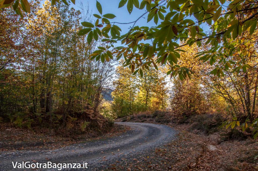 foliage-104-castagneti-val-gotra