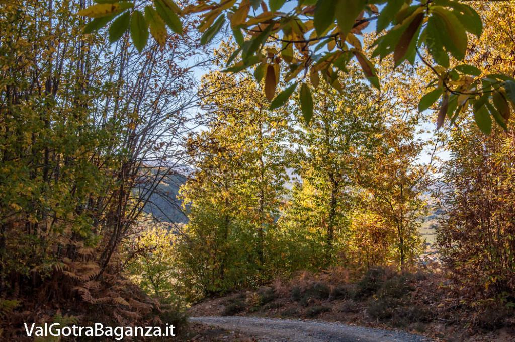 foliage-105-castagneti-val-gotra