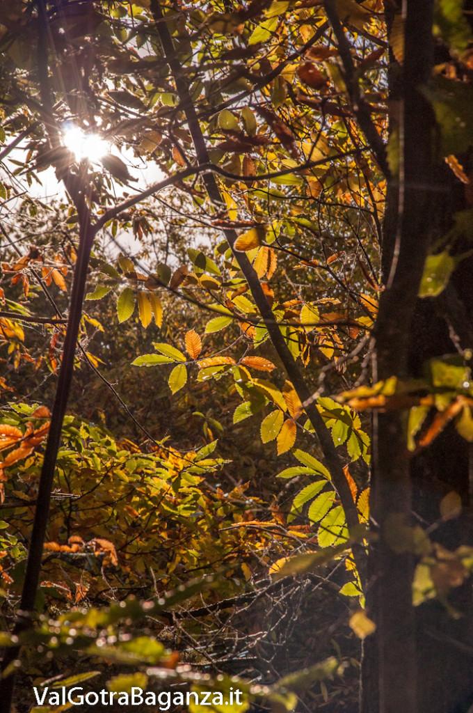 foliage-118-castagneti-val-gotra