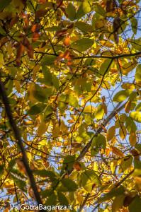 foliage-119-castagneti-val-gotra