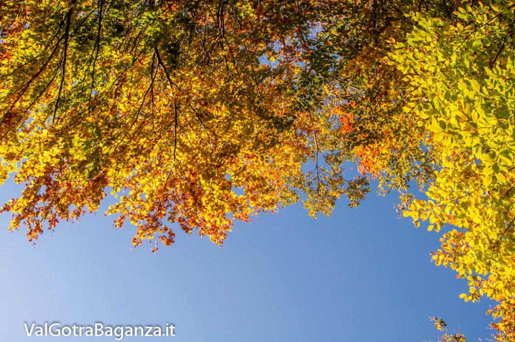 foliage-122-faggeta