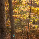 foliage-123-castagneti-val-gotra