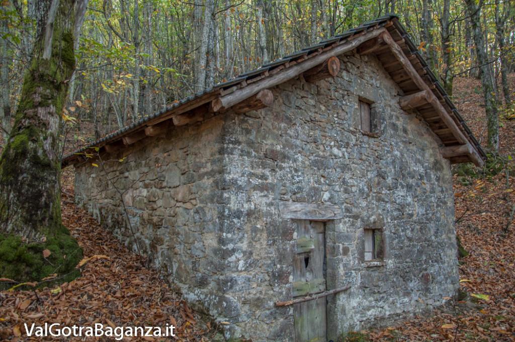 foliage-128-castagneti-val-gotra