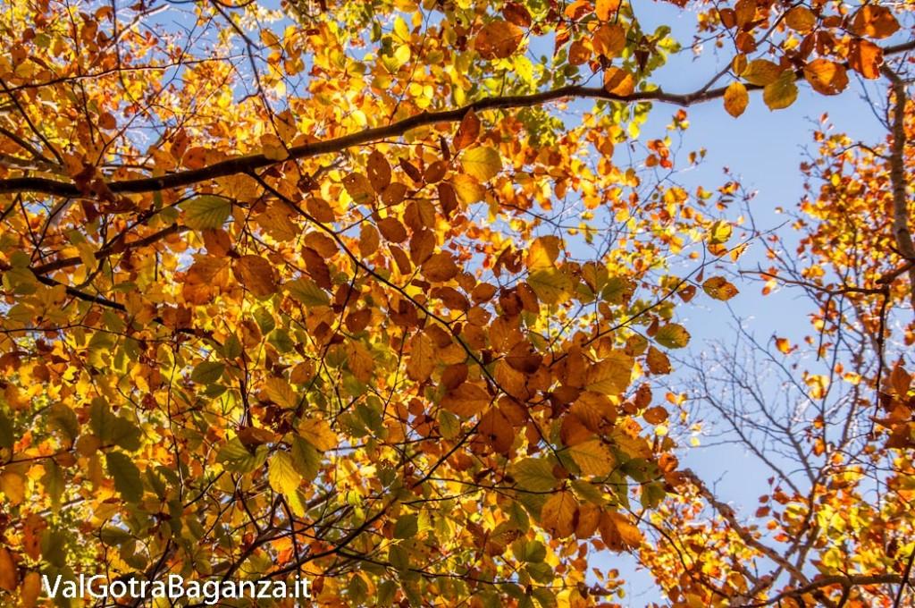 foliage-128-faggeta