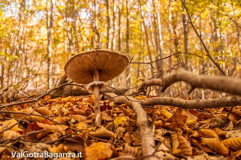 foliage-132-funghi