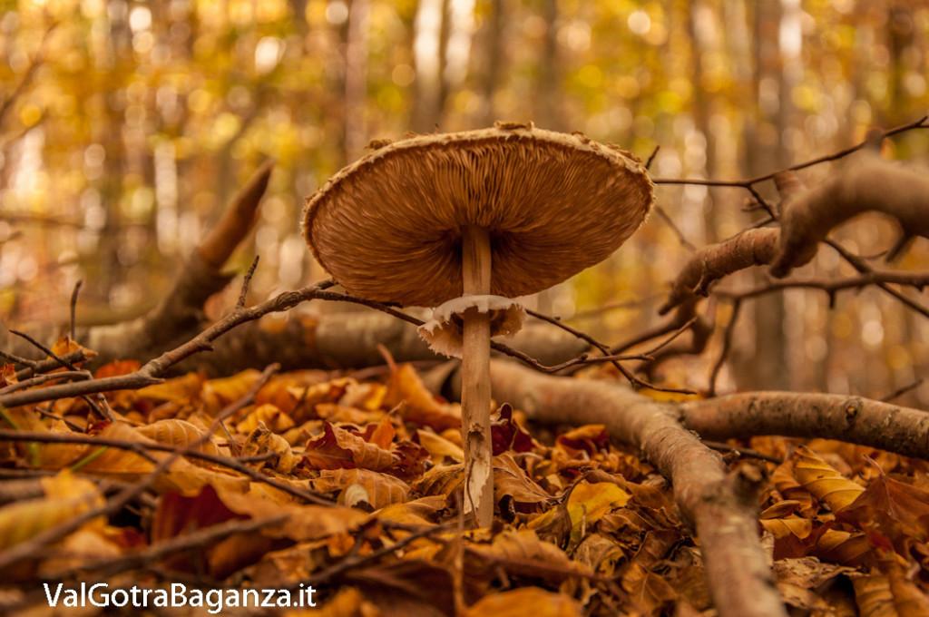 foliage-133-funghi