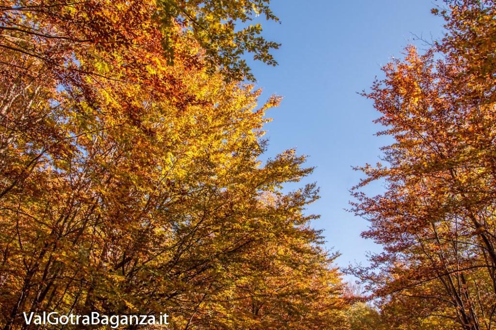 foliage-142-faggeta