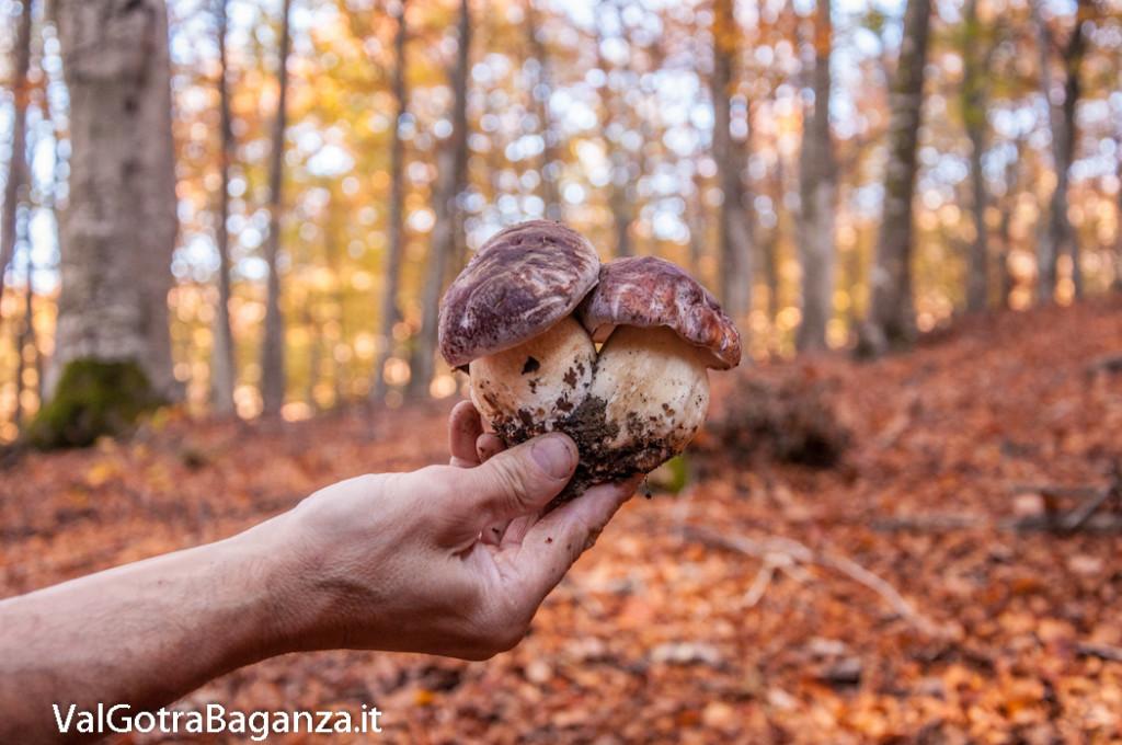 foliage-161-funghi