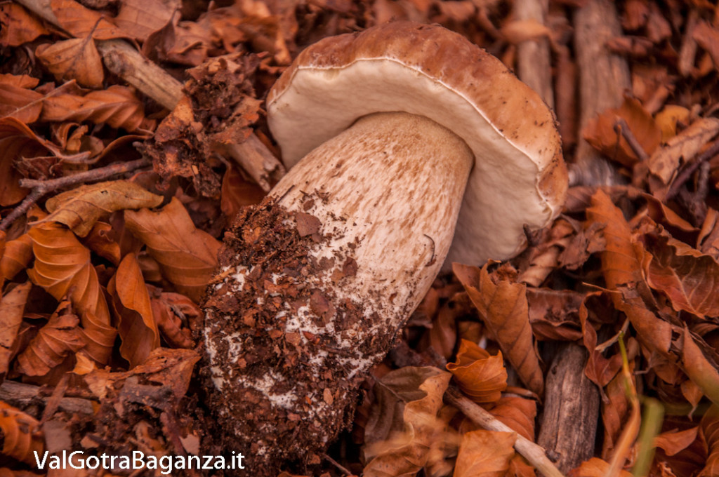 foliage-195-funghi