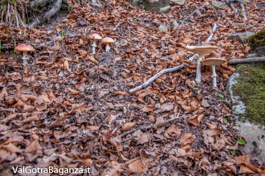 foliage-212-funghi