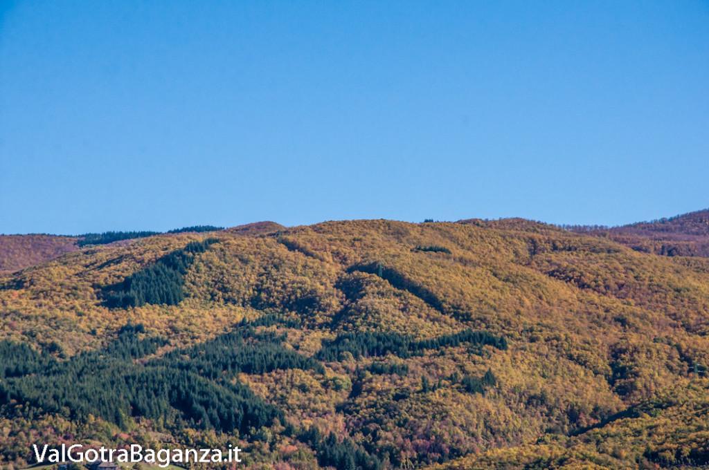 foliage-albareto-123-val-gotra