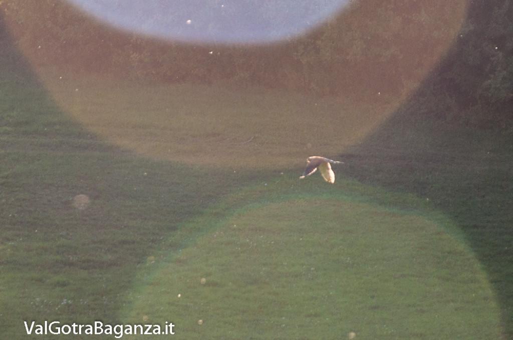gheppio-comune-102-valgotra
