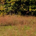 gheppio-comune-107-natura