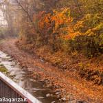 airone-cenerino-102-autunno