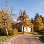 foliage-102-tombeto