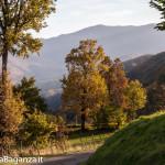 foliage-159-val-gotra