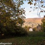 foliage-162-tombeto