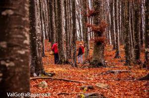 funghi-232-bosco-albareto