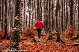 funghi-238-bosco-albareto