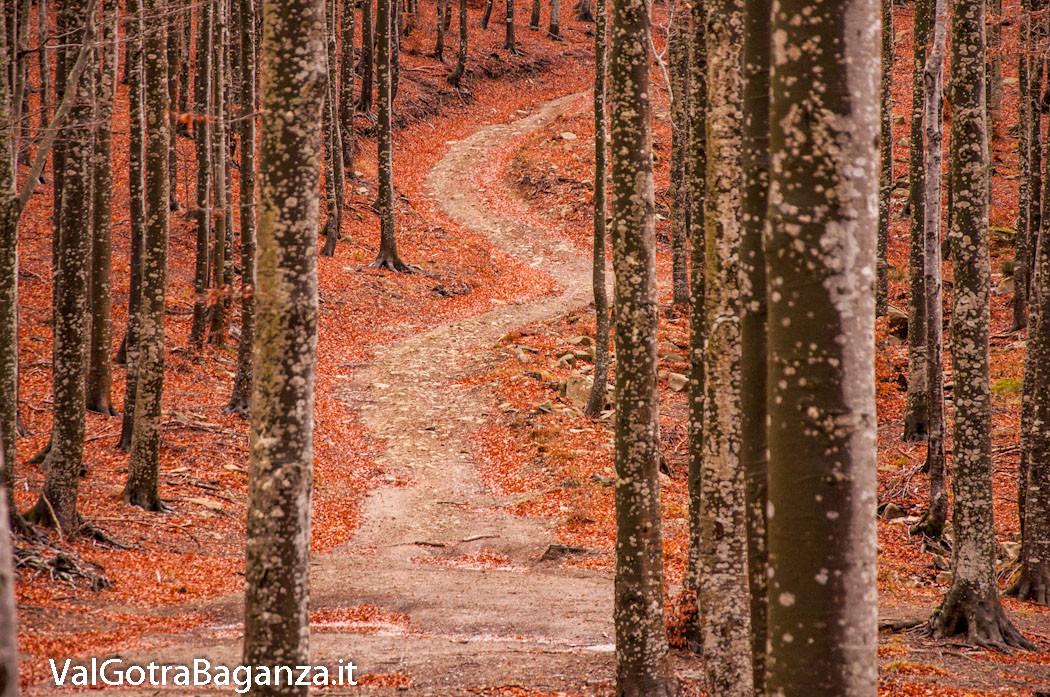 funghi-244-bosco-albareto