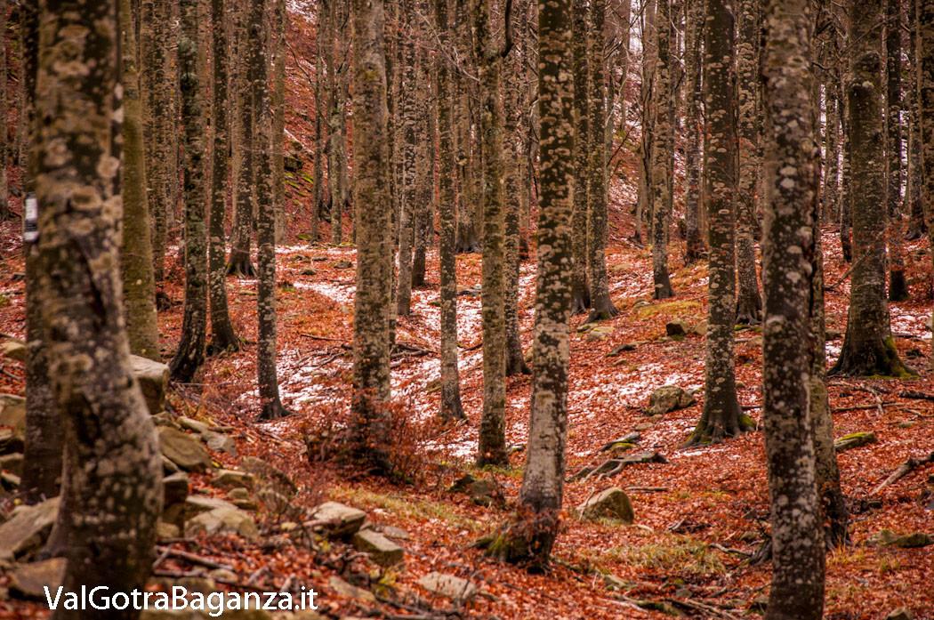 funghi-265-bosco-albareto