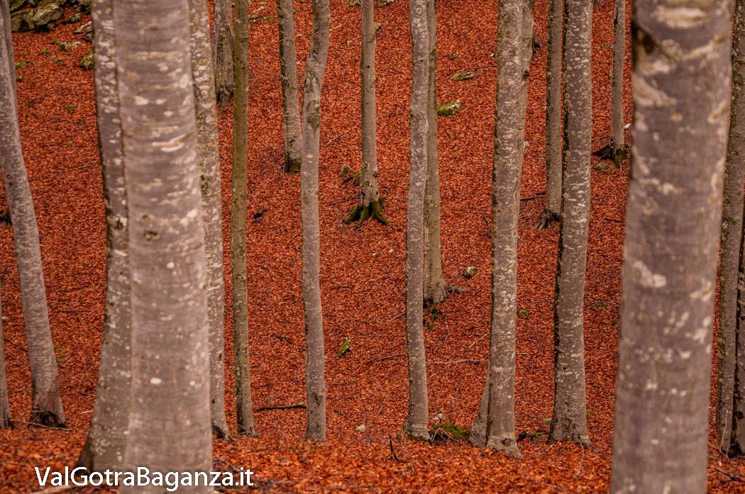funghi-301-bosco-albareto