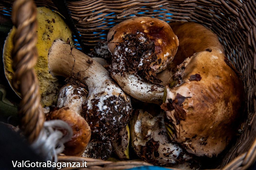 funghi-317-bosco-albareto