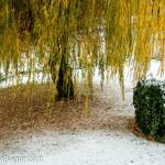 prima-neve-autunno-albareto-108