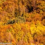 salti-del-diavolo-131-autunno-foliage