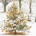 neve-100-inverno