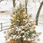 neve-103-inverno